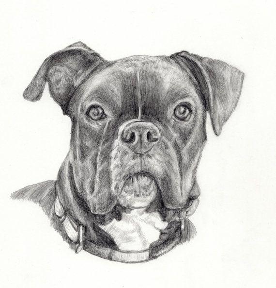 Dessin boxer chien - Boxer chien dessin ...