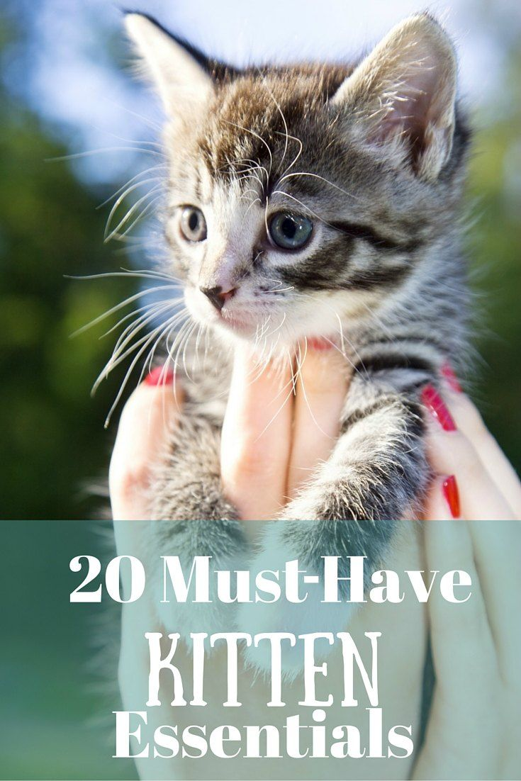 Adopting Two Kittens And This Is Very Helpful Kitten Supplies Cat Care Kitten Care