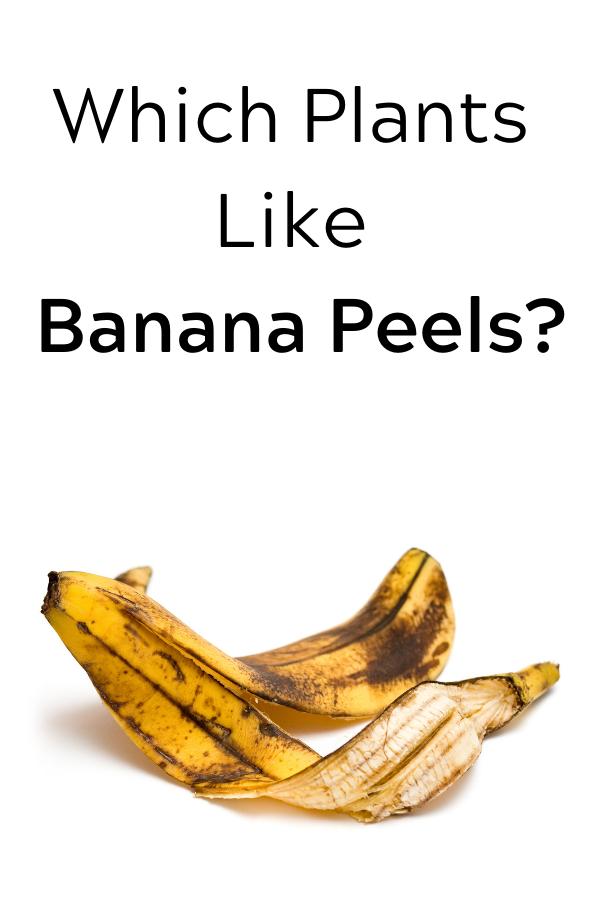 Which Plants Like Banana Peels Banana Banana Peel Peel