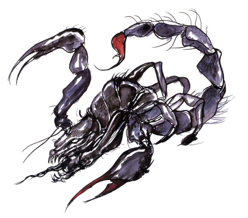 Скорпион картинки и арты