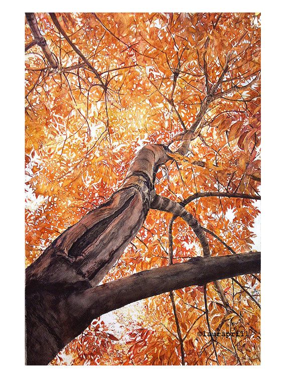 Fall Tree Original Photorealistic Watercolor 24x32 By Lauraprill