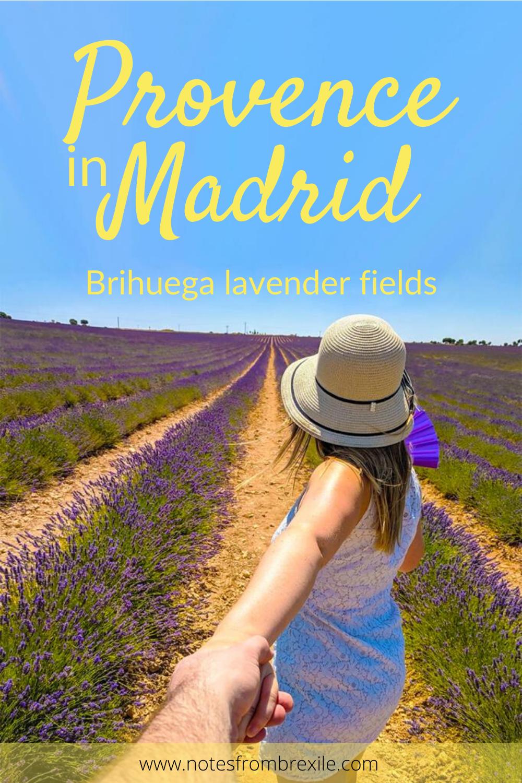 Provence In Madrid Brihuega Lavender Fields Madrid Travel Day Trips Travel Inspiration