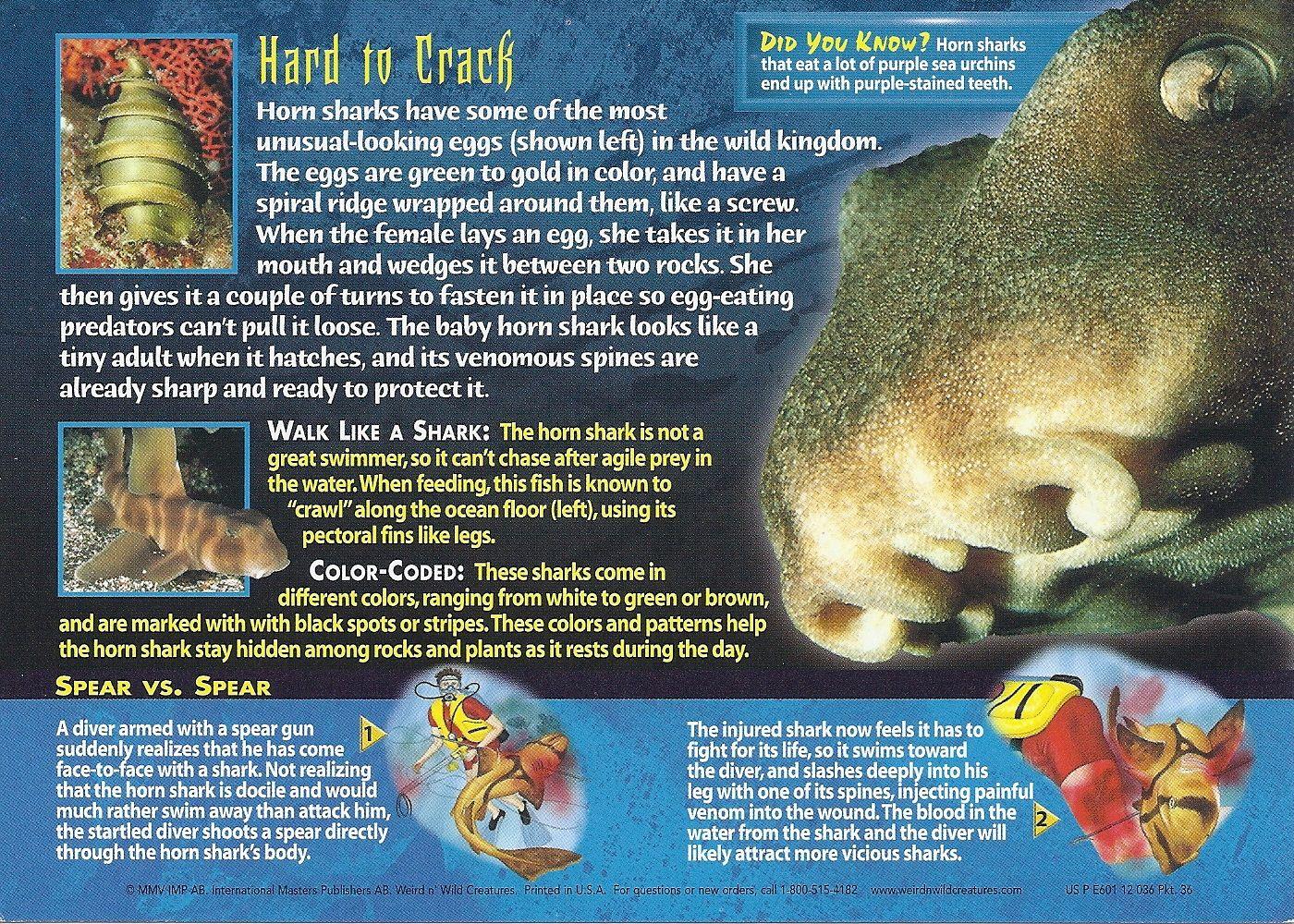 Horn Shark Weird N Wild Creatures Wiki Fandom Horn Shark Wild Creatures Shark