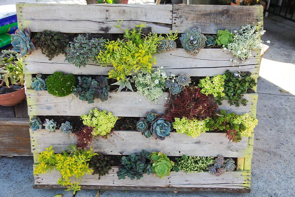 plant wall made with used pallet got the pallet from home