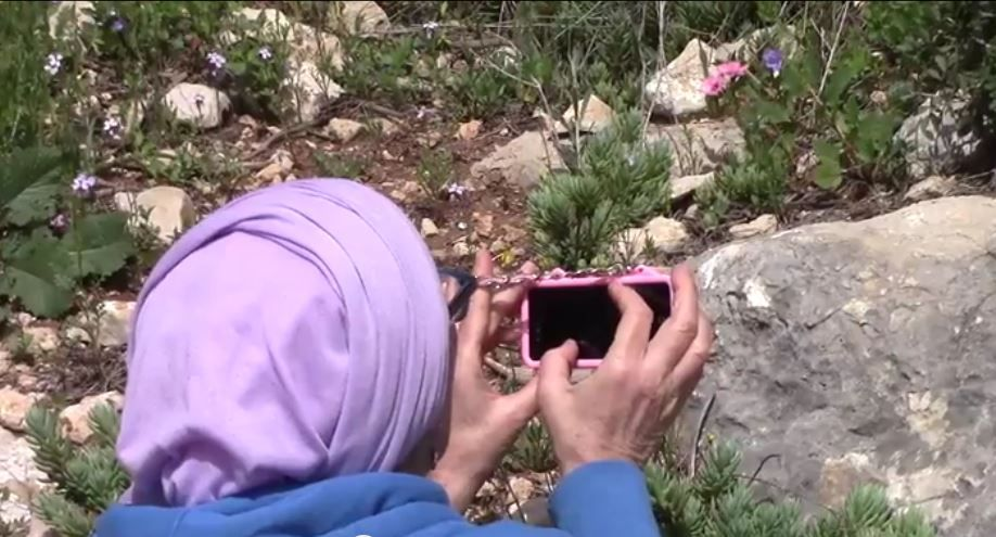 Searching for Wild Iris on Mount Gilboa -  Chana and Shmuel went searching for the rare wild Iris blooms…