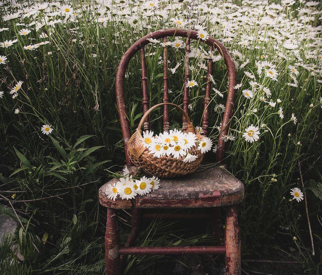 ㅤ صَباحكُم〰•• بِدايَة جَميلة..، وطَريق مَفتُوح، وأمنيَات