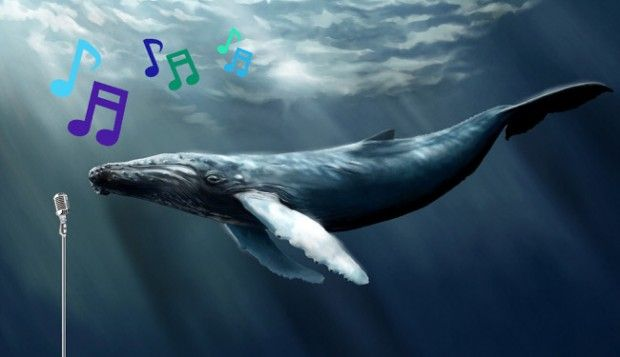 Humpback whales have pop music.