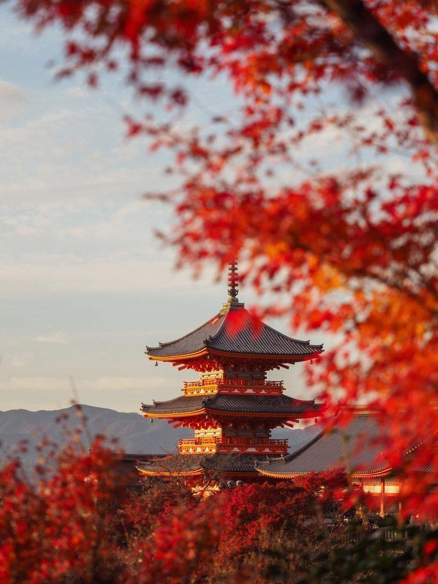 Autumn in Japan - Travel and Photography Tips for Kyoto + Tokyo #travel