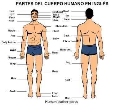 Ingles basico para poder viajar: Partes del cuerpo humano en inglés ...