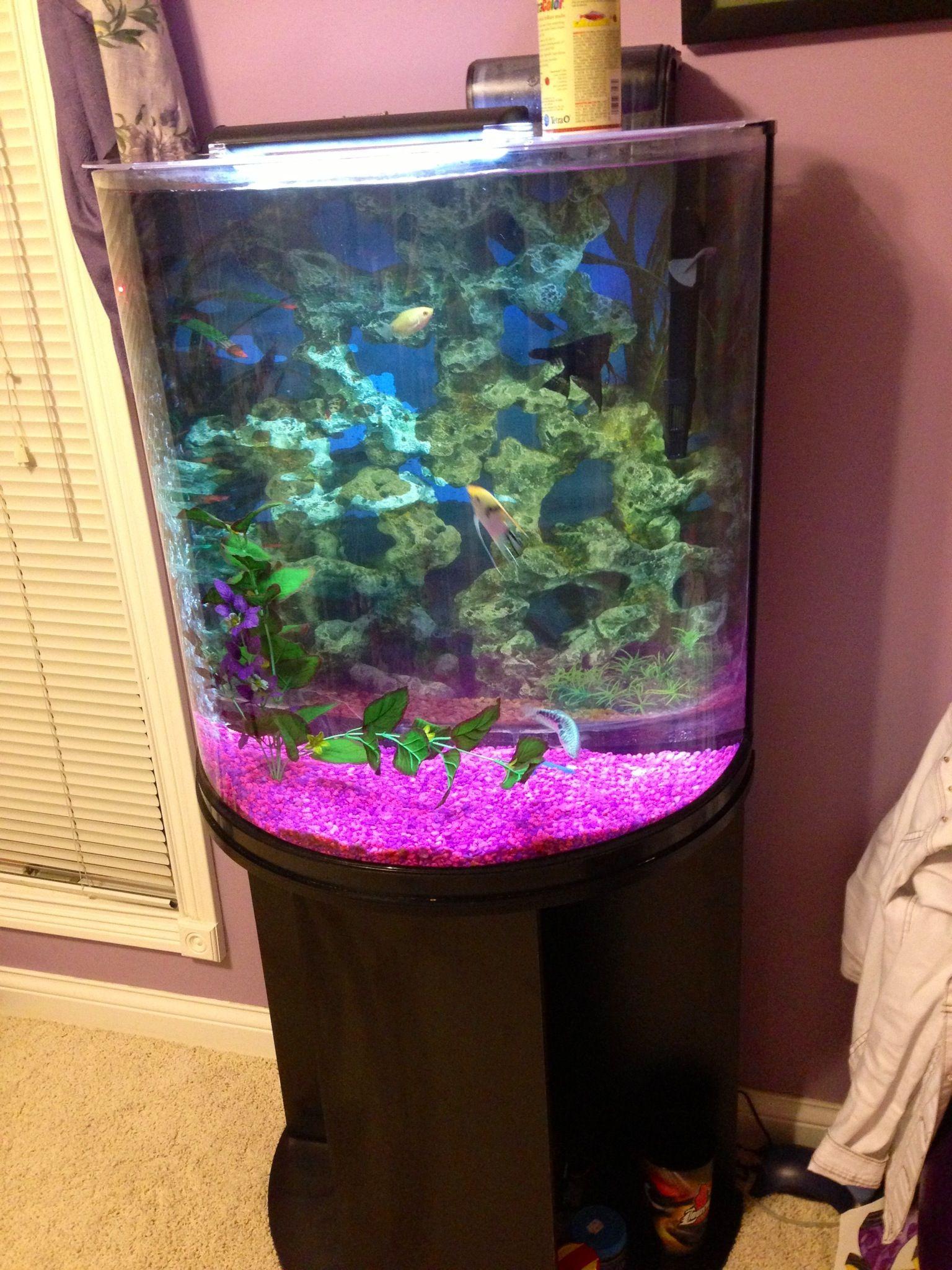 Fish tank aquarium castle hill - Half Moon Fish Tank