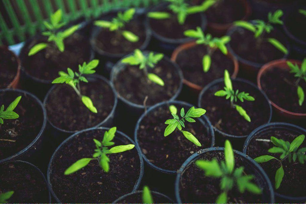 Organic Gardening Encyclopedia
