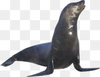 Sea Lion Png Tux Paint Stamp Browser Animals 76 100 200 153 Png Download Free Transparent Background Sea Lion Png Png Download Sea Lion Animals Tux Paint