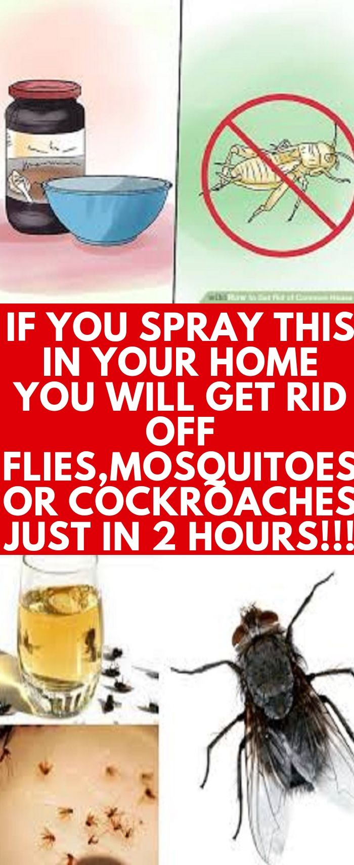 How To Get Rid Of All The Flies In My Backyard - Backyard ...