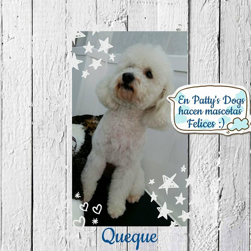 """El blog de Patty's Dogs: """"Fotos clientes peluquería canina"""""""