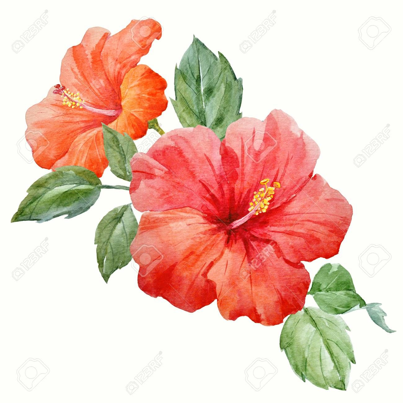 Watercolor Tropical Hibiscus Flower Stock Photo Sponsored Hibiscus Tropical Watercolor Photo Flower Art Images Watercolor Flowers Hibiscus Drawing