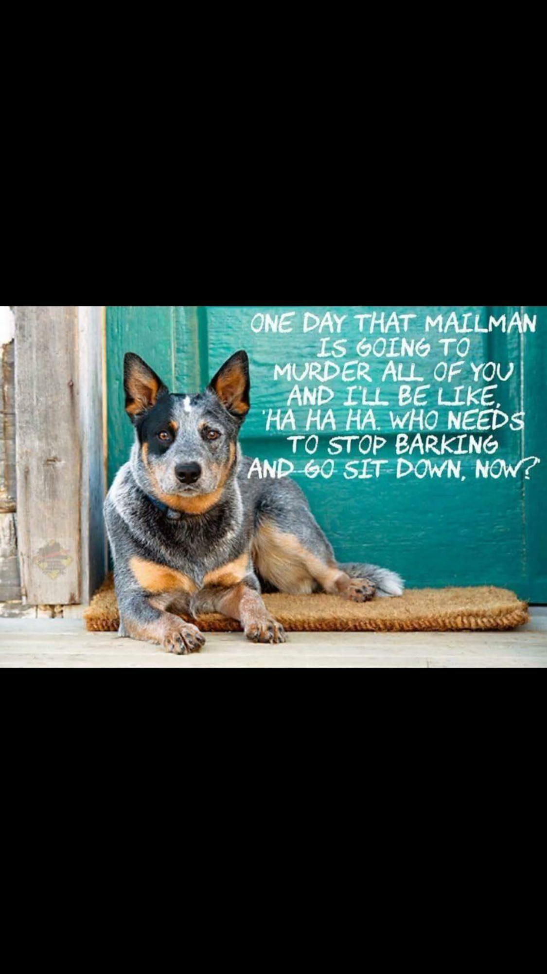 Pin by Bekki Reed on My Pups Dogs, Purebred dogs, Animals