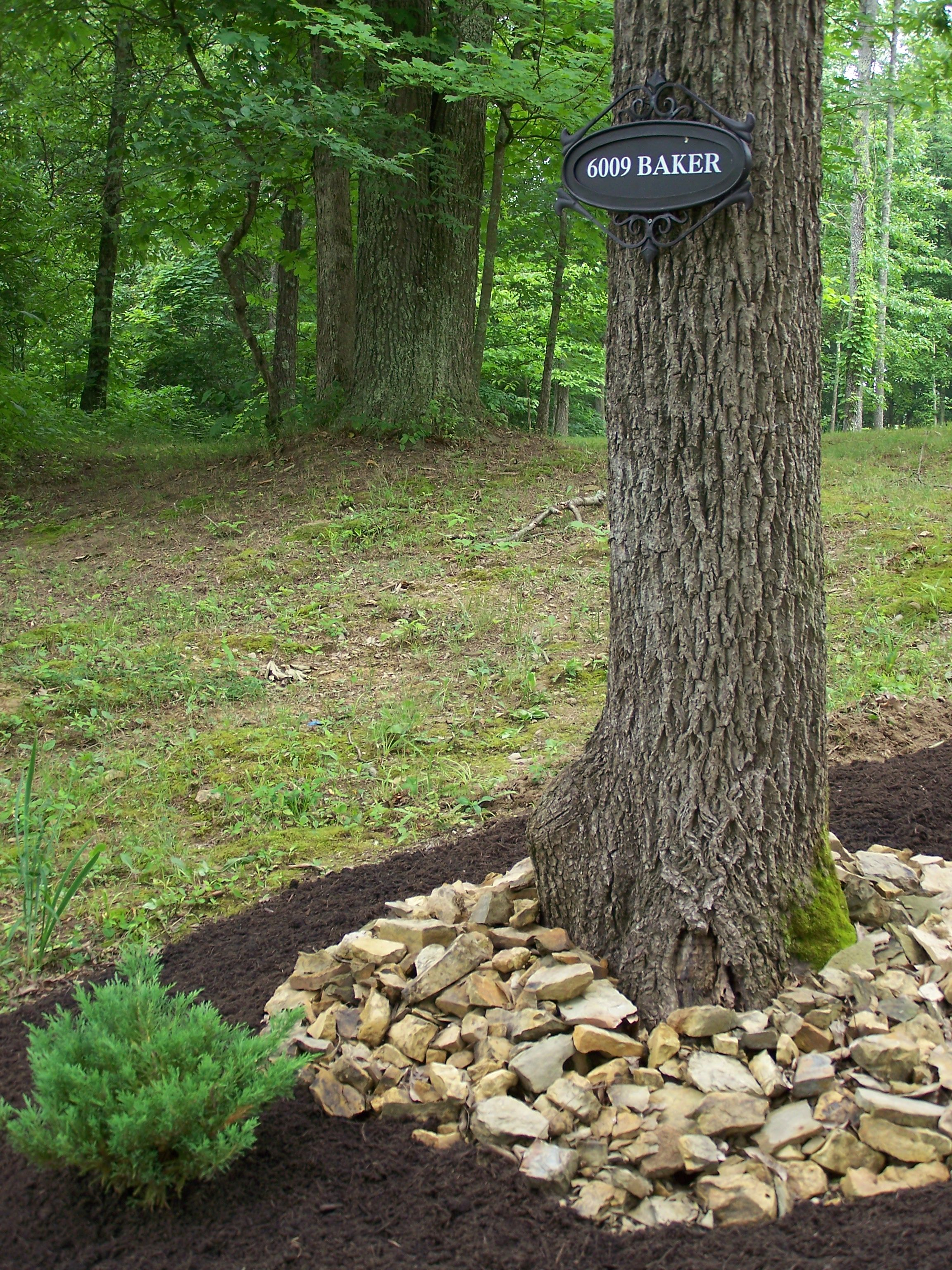 Landscaping With Broken Stones Landscaping Around Trees Landscaping With Rocks Landscape Trees