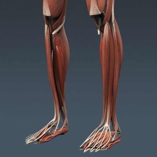Human Male And Female Complete Anatomy Body Muscles Skeleto 3d