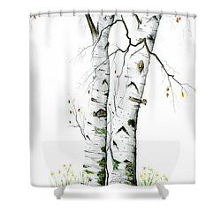 White Birch By Mary Tuomi Birch Printed Shower Curtain Curtains