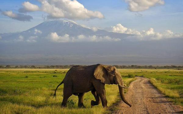 Our Kilimanjaro picoftheday! Travel TTOT Climbing