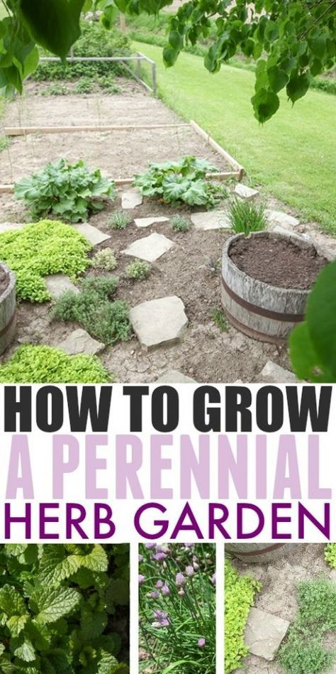If you love the idea of herb garden that you can plant once and enjoy over and over again for years to come, then perennial herbs are for you! Here's how to grow a perennial herb garden, and which herbs to choose. #kräutergartendesign