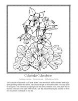 Beautiful Wildflower Coloring Pages With Descriptions About The