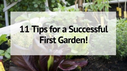 Gardening for Beginners 11 Tips for a Successful Start is part of Gardening for beginners, Garden pests, Gardening tips, Vegetable garden for beginners, Tips, Vertical herb garden - Are you a new gardener  Don't worry! Here are 11 tips for beginning gardeners to help you have the best growing experience ever!