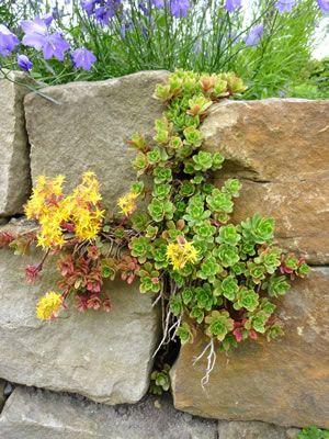 trockenmauer bepflanzen garten pinterest trockenmauer g rten und steingarten. Black Bedroom Furniture Sets. Home Design Ideas