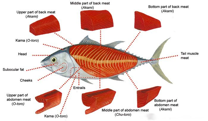 Tuna Meat Diagram Library Of Wiring Diagram