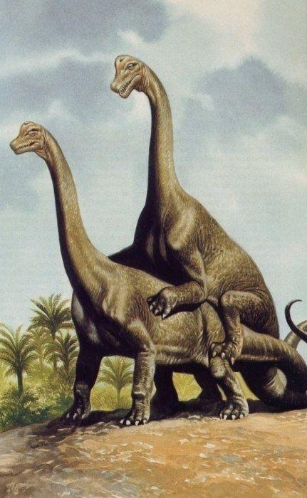 Dinosaur Human Sex Porn - dino porn