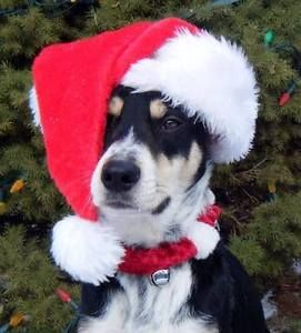 "WOOFJOCKS Present ""Home For The Howl-idays"""