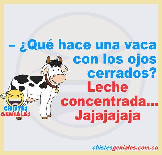 – ¿Qué hace una vaca con los ojos cerrados?