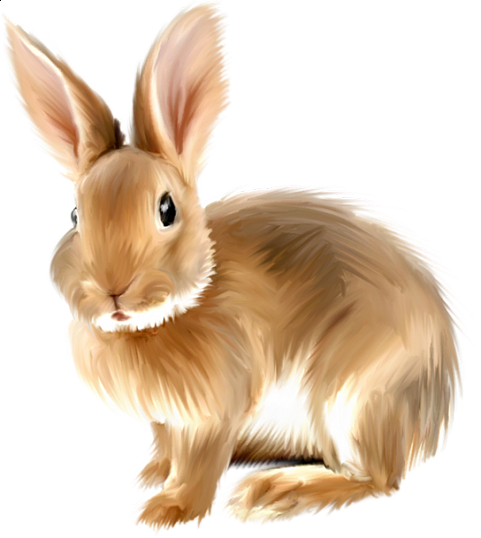 Painted Bunny Clipart Png Rabbit Pictures Animals Images Rabbit Clipart