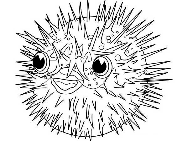 Puffer Fish Is Porcupine Fish Coloring Page Kids Play Color Fish Coloring Page Coloring Pages Porcupine