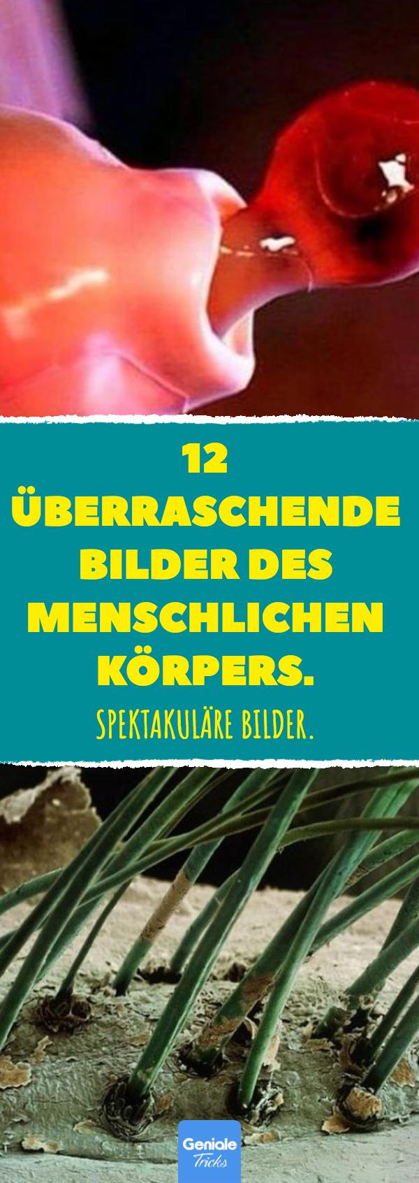 12 überraschende Bilder des menschlichen Körpers. #mikroskop #körper ...
