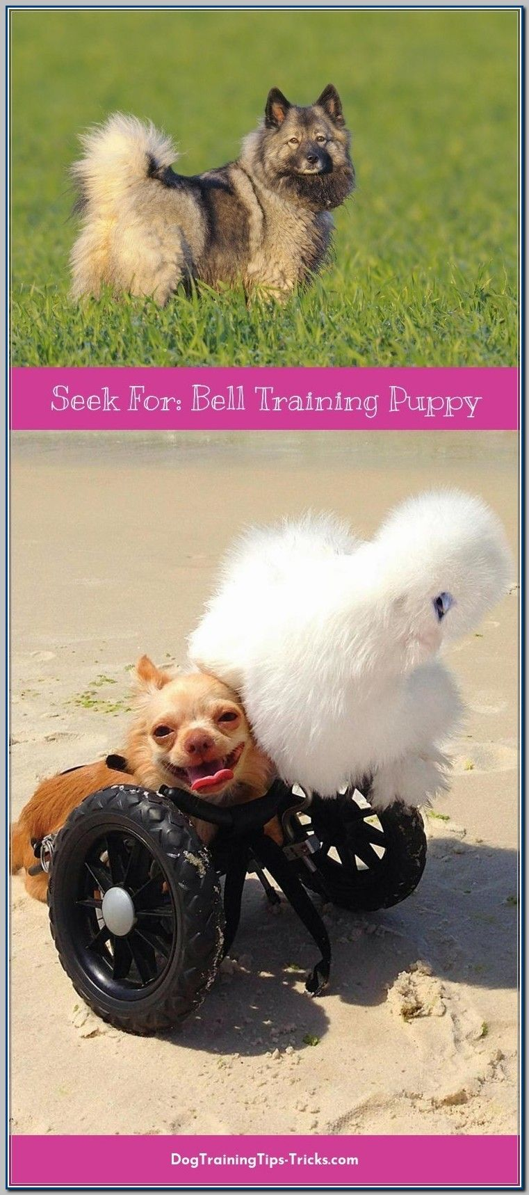 Ways To Use Bell Training For Puppies Puppies Dog Training Animals