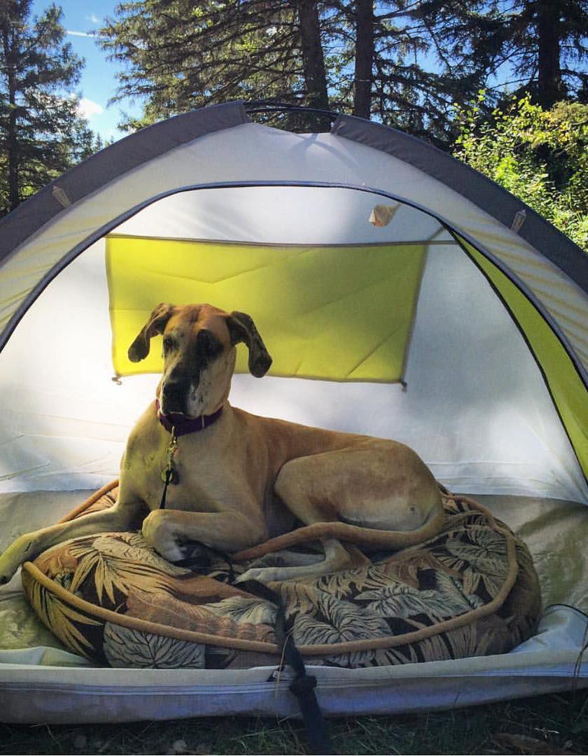 Adorable camping with dogs instagram account is the