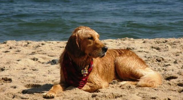 Top 20 Monmouth and Ocean County Dog Friendly Places Dog