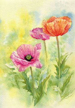 Learn To Paint Bright Vibrant Poppies In Watercolour With Julie King Aquarell Mohnblumen Wie Man Blumen Malt Blumen Kunst