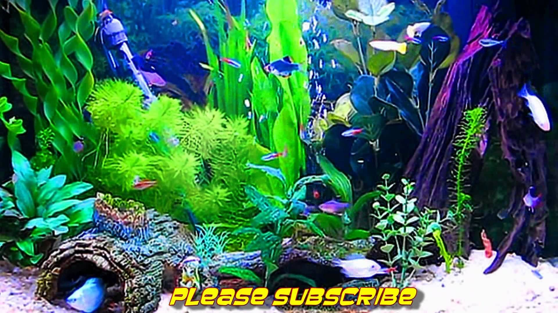 sim aquarium screensaver live wallpaper my screen savers pinterest live wallpapers and wallpaper