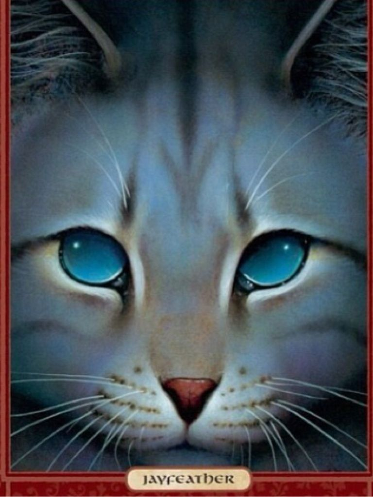 Jayfeather Smart Thoughtful Independent And Had The Power To Go
