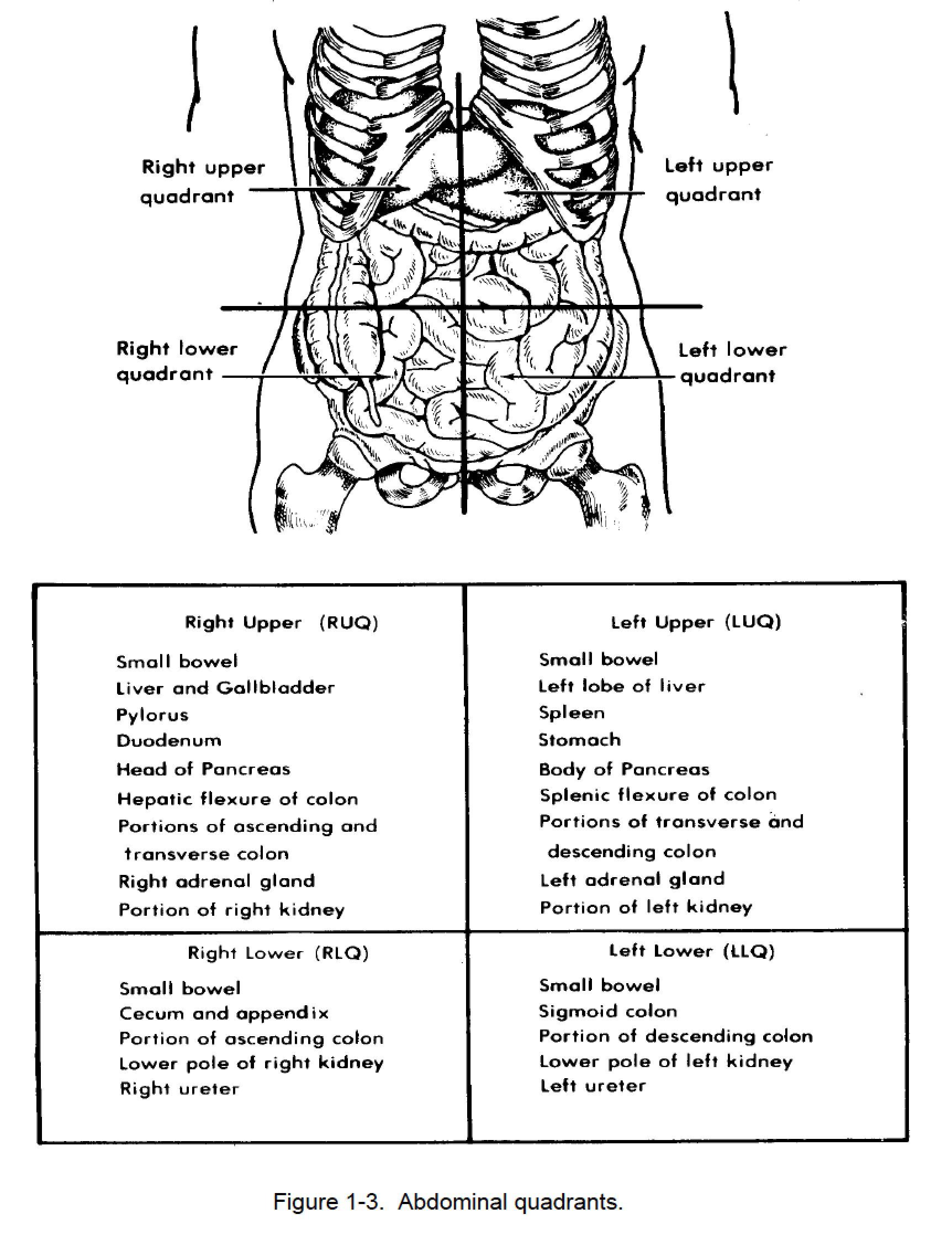 Quadrants Of Stomach Figure Abdominal Quadrants Nursing
