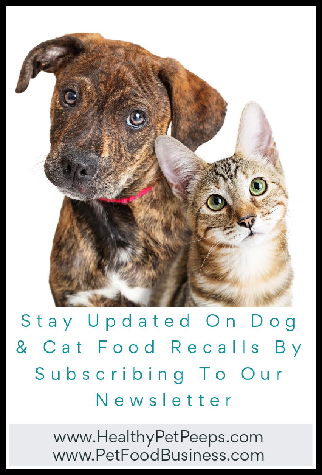 Receive Dog And Cat Food Recalls By Email Subscribe To Our Newsletter In 2020 Dog Food Recall Dogs Cat Food