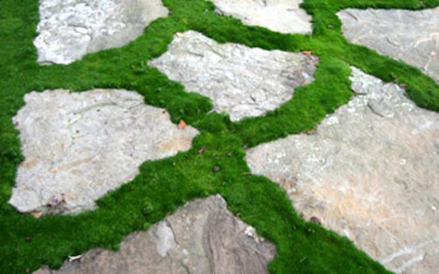 Flagstone Walkway with Moss | Patios and Walkways | Moss plant