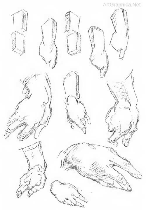 wrist and hand construction, wrist anatomy | Anatomy | Pinterest ...
