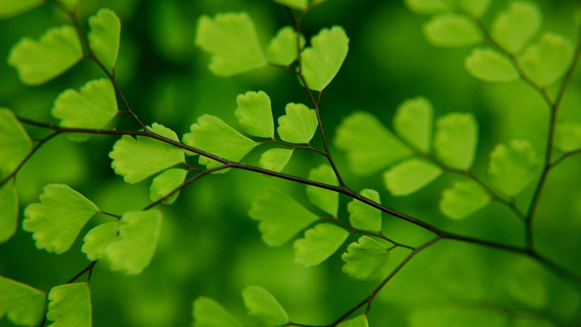 green leaves wallpaper green leaves hd wallpapers mother