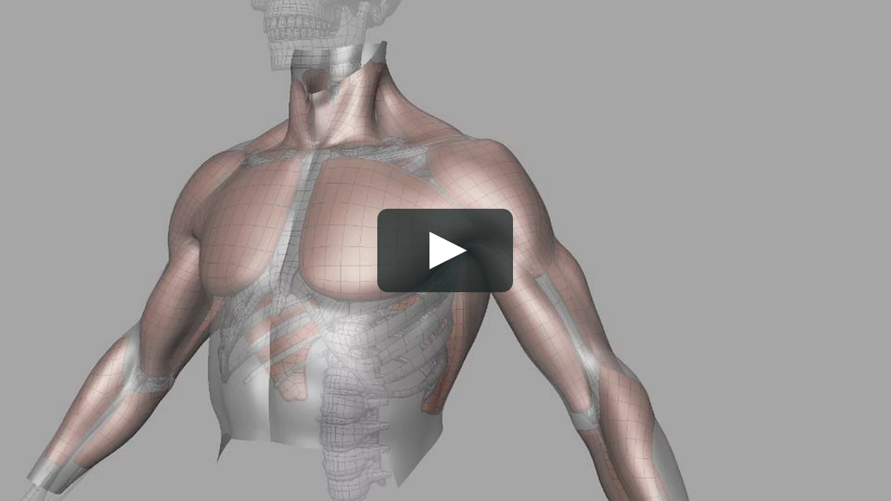 Muscles Deformation Test | Maya and Anatomy