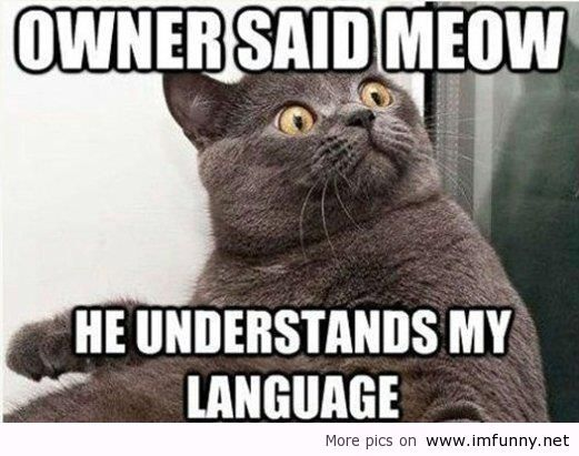Funny Cat Quotes Top 35 most funniest cat quotes | Funny Relationship Stuff | Funny  Funny Cat Quotes