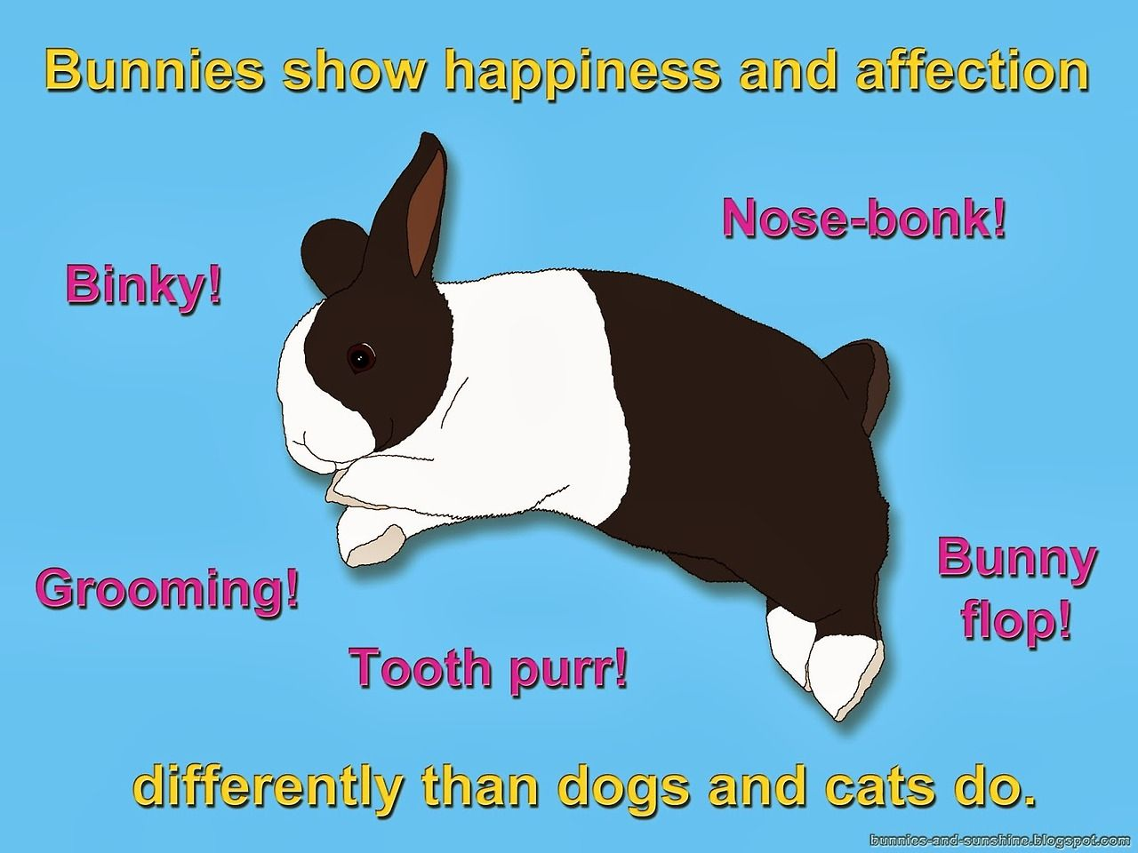 Bunnies Show Happiness And Affection Differently Than Dogs And Cats 08 08 19 Bunny Crazy Cats Dog Cat