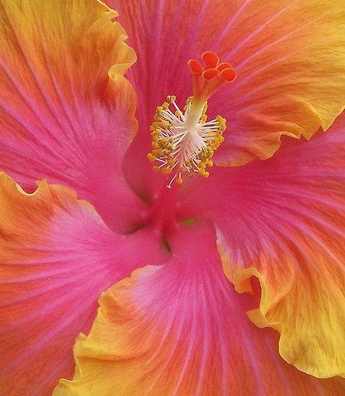✯ Bloom